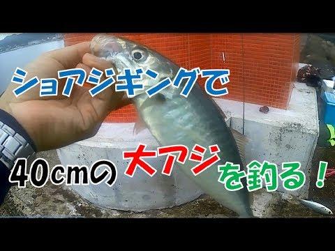誰でも簡単アジング!エギをメタルジグに付換えて40cmの大アジを釣る!