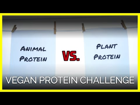 Which Has More Protein?