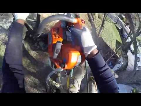 Climbing Trees Arborist Style with the Ion Air Pro 3
