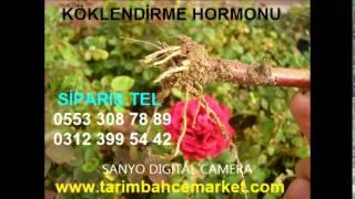 KÖKLENDİRME HORMONU,KÖKLENDİRME HORMONU,sıvı köklendirme hormonu,sıvı ıba, köklendirme