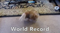 World Record for Number of Spins a Dog Can Do In One Minute
