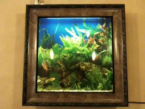 Fish tank in a picture frame - YouTube