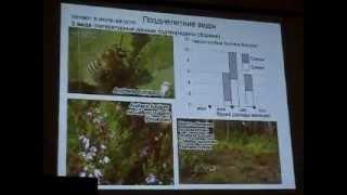 Фенология Пчел (Hymenoptera, Apoidea) Московской области