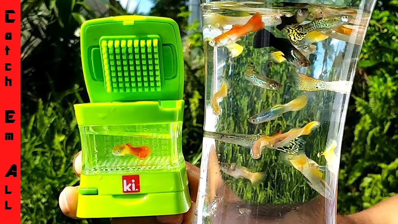 World S Smallest Aquarium Colorful Mini Live Fish Tank Youtube