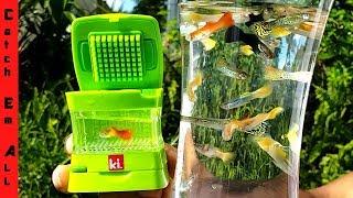 WORLD'S SMALLEST AQUARIUM! (Colorful Mini Live Fish Tank)