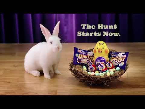 Guy Bradford IS Cadbury Eggs