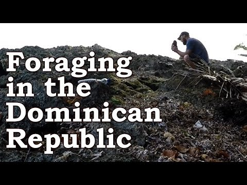 Tropical Surival Challenge | Foraging For Wild Edibles | Dominican Republic