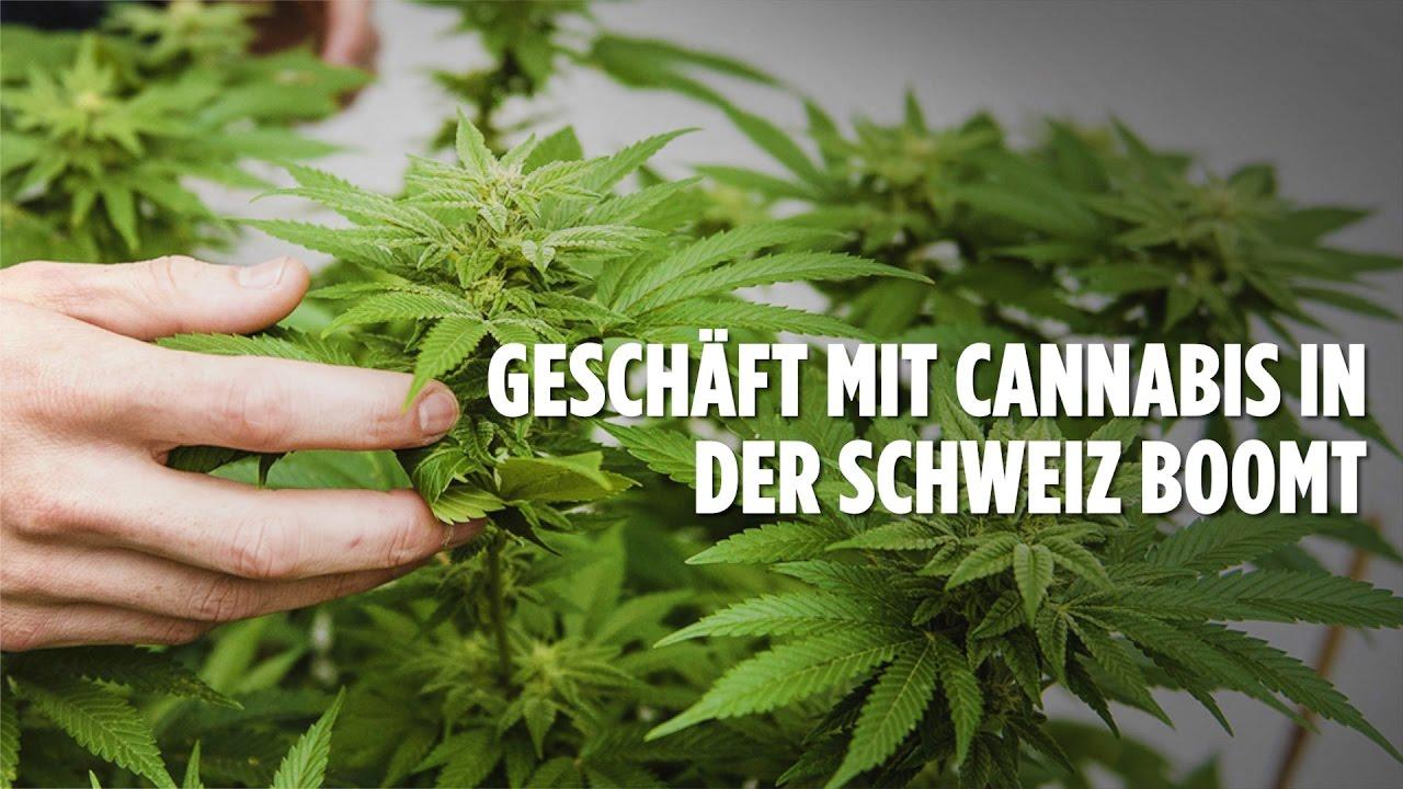 Cannabis In Der Schweiz