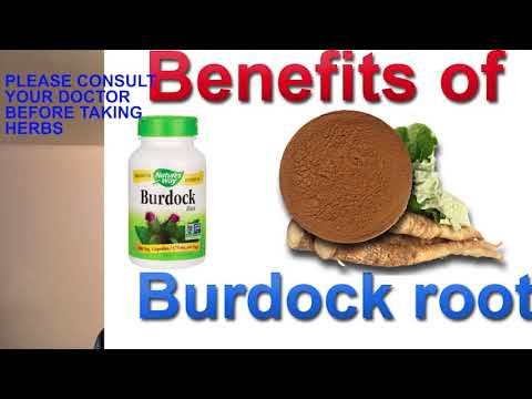 Benefits of burdock root and its mineral composition