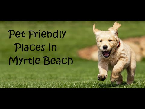 Pet Friendly In The Myrtle Beach Area