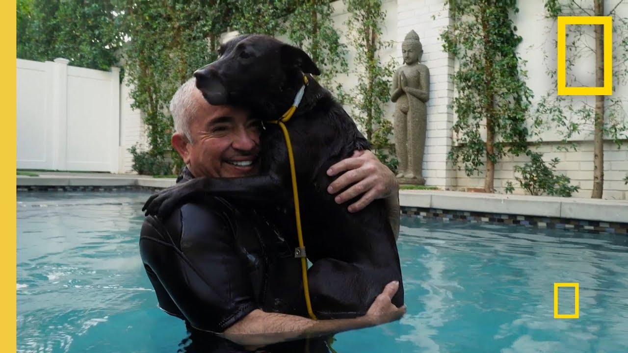 Teaching a Fixated Dog to Focus | Cesar Millan: Better Human Better Dog