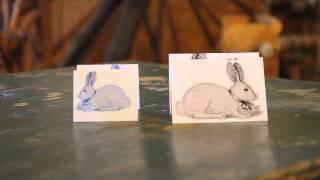 dominant/recessive in rabbit color genetics
