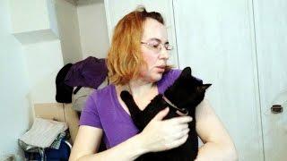 Взяли бездомную кошку из приюта Удочеренная и счастливая Агата и ее новая семья