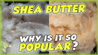 Yellow -vs- White Shea Butter | NATURAL HAIR