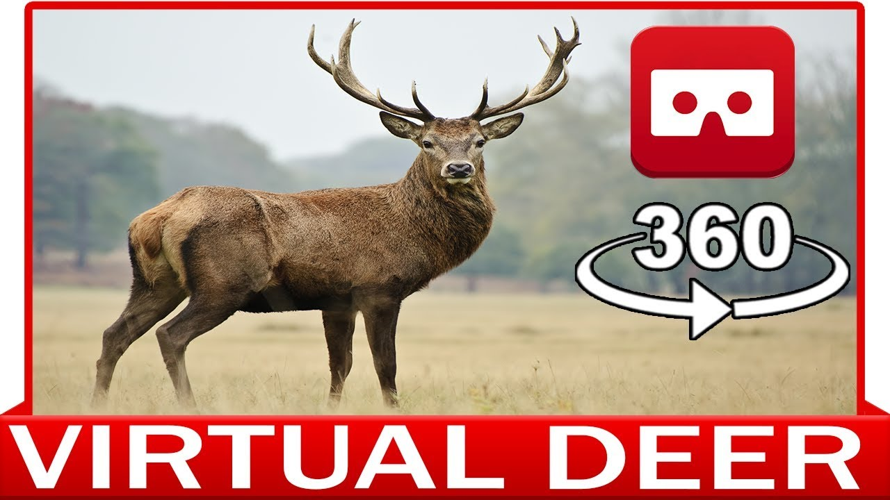 360° VR VIDEO - DEER, ARIES, MOUFLON - DISCOVERY NATURE & ANIMAL - VIRTUAL REALITY 3D