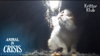 Poor Kitten Stuck In A Narrow Pit Waits For Passengers' Help (Full ver.) | Animal in Crisis EP100