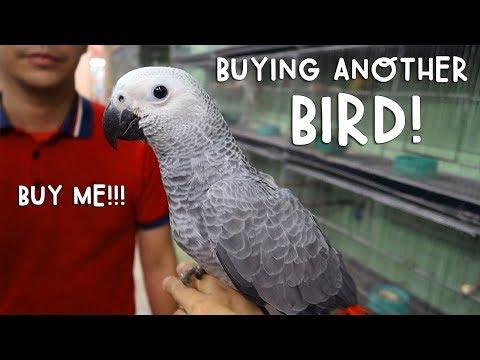 Buying Another Bird | Vlog #174