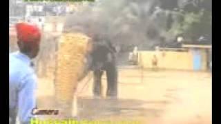 elephant attack at chavakkad