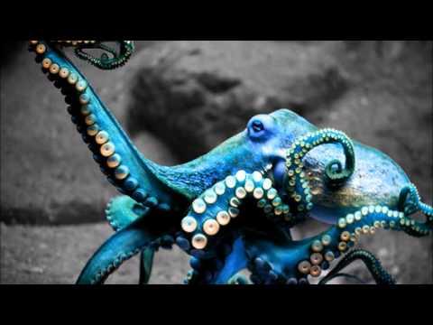 DJ Trypno-Vol 4 Monster Chill Mix