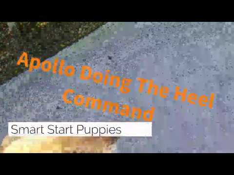 Board and Train In Fort Lauderdale-Smart Start Puppies