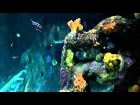 Kansas City Sealife Aquarium Youtube