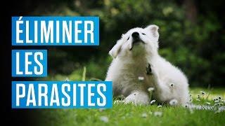 Comment éliminer les parasites sur vos animaux