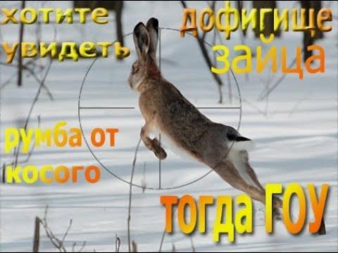 охота на зайца охота с пневматикой