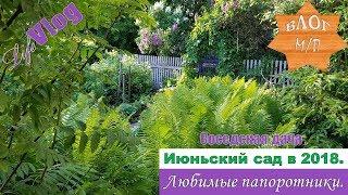 Соседская дача. Июньский сад 2018. Любимые папоротники.