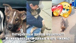 До слез Встреча потерянного щенка и его кормилицы Умка нашлась после неудачного пристройства !