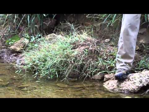 Raleigh Stream Restoration IV - Bank Erosion