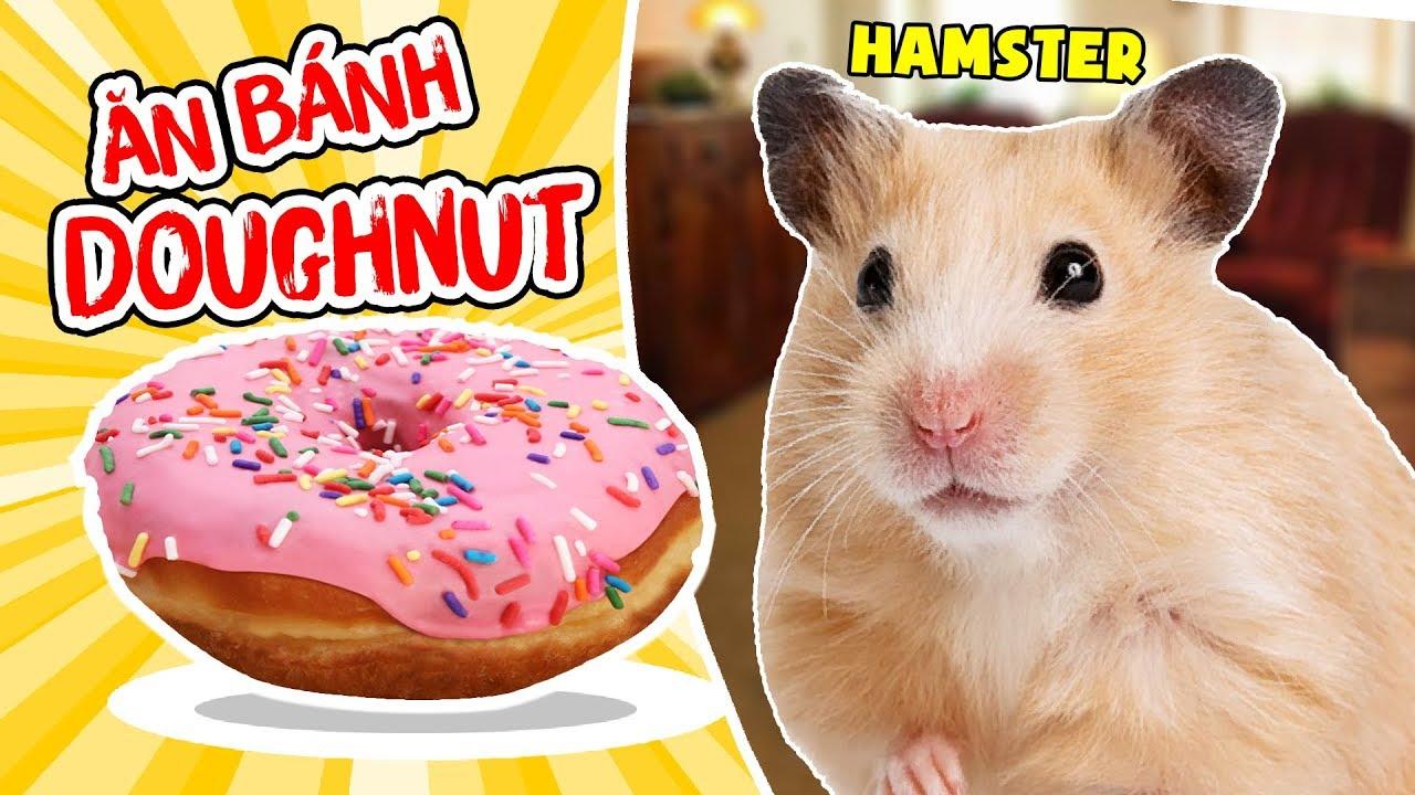 MỀU LÀM BÁNH DOUGHNUT CHO 2 BÉ HAMSTER ĂN   HAMSTER EATING DOUGHNUT   Chuột Hamster Của Mều