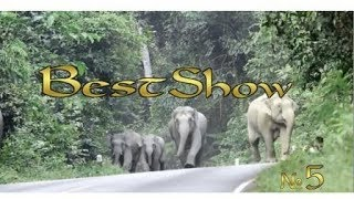 Подборка приколов, обломов, неудач от BestShow#5. Слоны зажигают