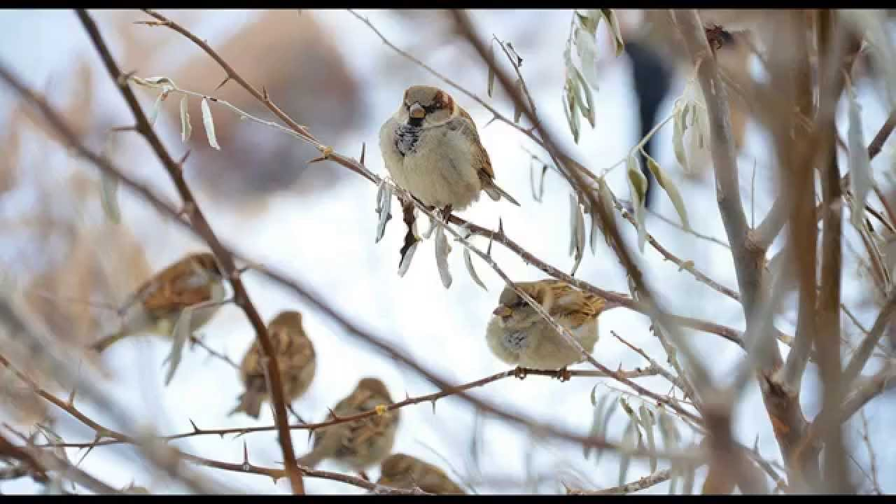Birdsong on a Winter Morning - 30 min Relaxing Nature