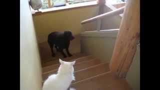 Лучшая подборка! Коты против собак!
