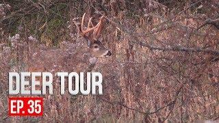 CRAZY RUTTING FOOTAGE, Intense Deer Vocalizations - DEER TOUR E35