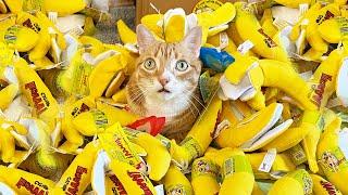 50 Catnip Bananas + 4 Cats!