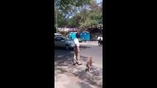 #respect Indian Cop Stops Traffic To Let Dog Cross The Road.epic,must Watch /\\/...