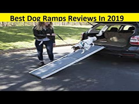 top-3-best-dog-ramps-reviews-in-2020