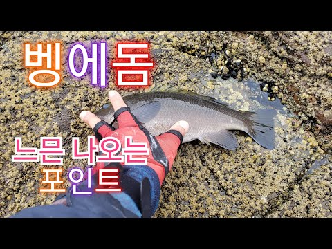 벵에돔 느믄 나오는 포인트 95회 Opaleye Rock Fishing