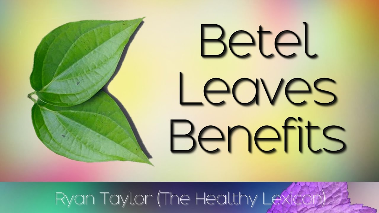 23 Amazing Medicinal Uses Of Betel Leaf (Paan Ka Patta) recommend