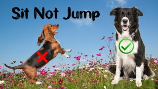 Teaching A Dog Not To Jump - Fast Sits- Polite Greeting