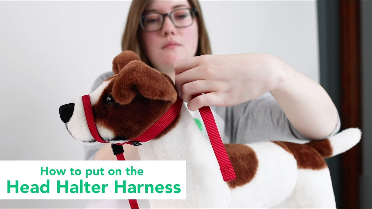 Preparing for the Harness Test | The Dog People by Rover com