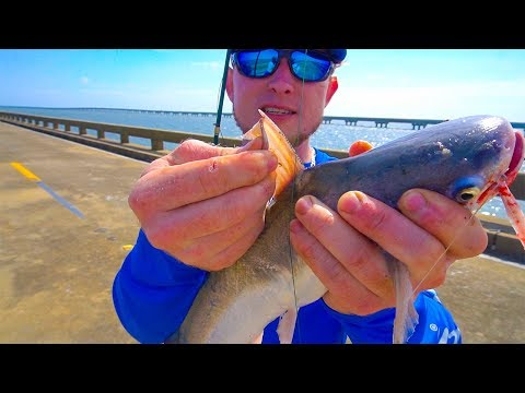The Secret To Relieve A Catfish Sting