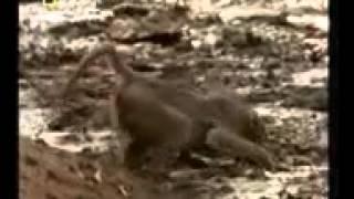 Помогает обезьяна(, 2016-02-27T19:30:51.000Z)