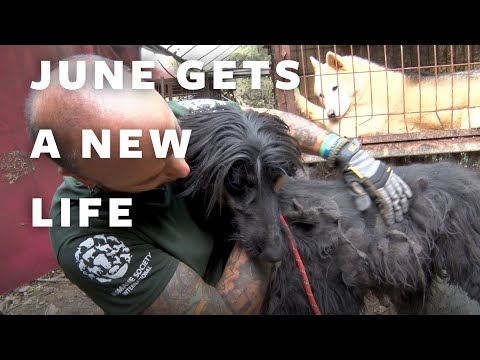 Dog Meat Farm Rescue - June's Story