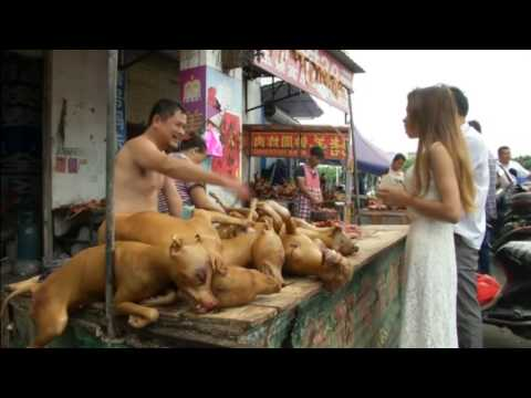 California animal charity rescues 1,000 dogs from China dog meat festival.