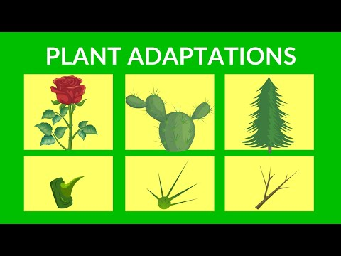 Adaptations in Plants   Video lesson for Kids