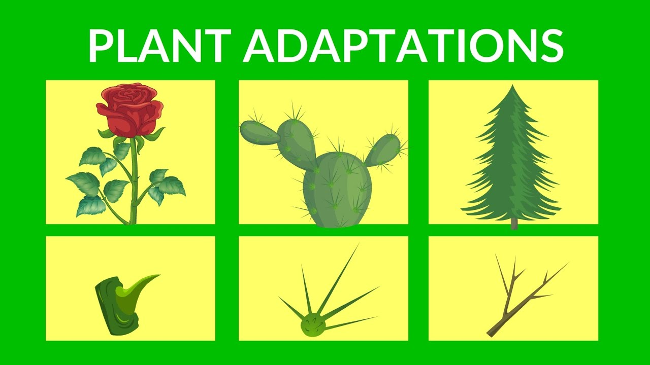 medium resolution of Adaptations in Plants   Video lesson for Kids - YouTube
