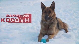 Як навчити собаку команди «ГОЛОС»? Поради прикордонника-кінолога.