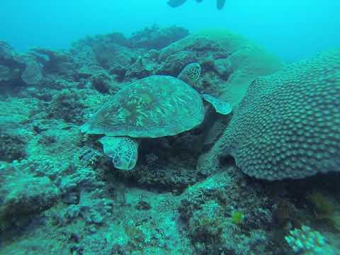 Turtle south point Fiji